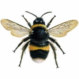 Bee Control  Bees Nest...